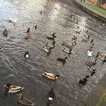 6. ducks in Park's Lake