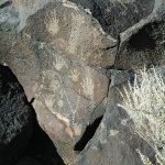 Foto de Petroglyph National Monument