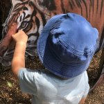 Zoo's are about getting to know the animals. Tigers have eyes.
