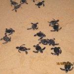 Photo of Turtle Hatchery Hikkaduwa