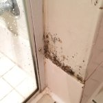 Mold in the bathroom