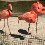 Zoo Ostrava의 사진