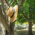 Loved the hat in the tree.