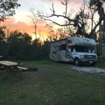 Photo of Collier Seminole State Park