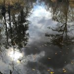 Trees reflecting in the swamp