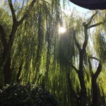 Sun behing the thickets