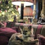 Dog Friendly....!