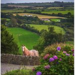 Billy the horse; Shot from driveway of Ardfield Farmhouse