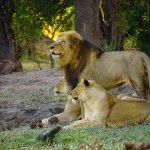 Bild från Tintswalo Safari Lodge