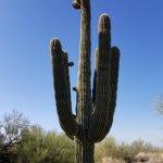 Saguaro & Mtns