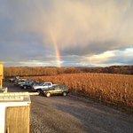 Rainbow in the vineyard