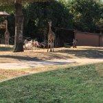 Parco Natura Viva Foto