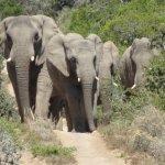 HillsNek Safaris, Amakhala Game Reserve Foto