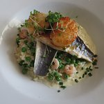 sea bass with scallops on a bed of rissotto