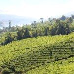 Foto de Ceylon Tea Trails