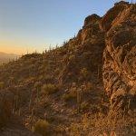 Saguaros in the golden hour