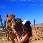 Giving the camel treats :)