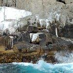 Australian Seals on Rocks