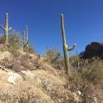Pima Canyon Image