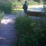 wooden walkway to pond to see ducks, dragonflies, and plants