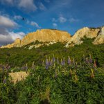 Lupines and cliffs on a perfect day