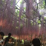 Photo of Ashikaga Flower Park