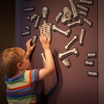 Playing with skeletons at the museum