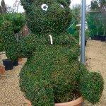 Topiary teddy bear