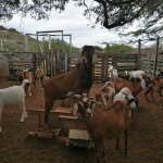 Photo of Aletta's Goat Farm