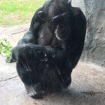 Foto de Houston Zoo