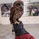 Shropshire Falconry Ltd Photo
