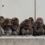 Photo of Takasakiyama Natural Zoo