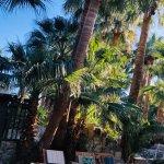 Foto van Two Bunch Palms