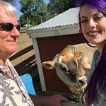 Dad, daughter and cow.