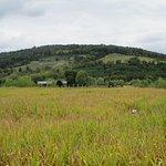 Φωτογραφία: Great Country Farms