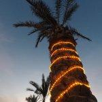 Xmas Palmtree 🌴🌟