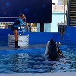 Photo de Miami Seaquarium