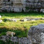 Uno de los gatos de la colonia felina que se refugia en el espacio del antiguo templo.