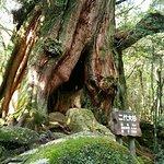 Foto di Shiratani Unsuikyo Valley