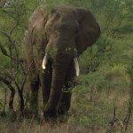 Foto de Garonga Safari Camp