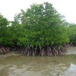 Außerhalb der Strände gibt es Mangroven