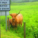 The Hairy Coo - Free Scottish Highlands Tour Foto
