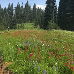 Gorgeous meadows in Paradise