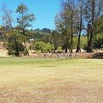 Photo of Devonvale Golf & Wine Estate