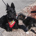 Angus and Petunia