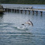 Photo of Dolphinarium, Cayo Naranjo