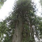 Photo de Ross Creek Cedar Grove Scenic Area