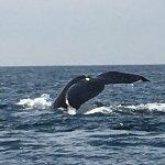 Foto de Ocean Friendly Whale Watching Tours