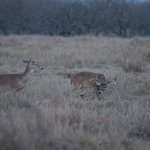 All pictures taken while on the big buck bonanza