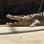 Crocodile exhibit at the Sydney Zoo